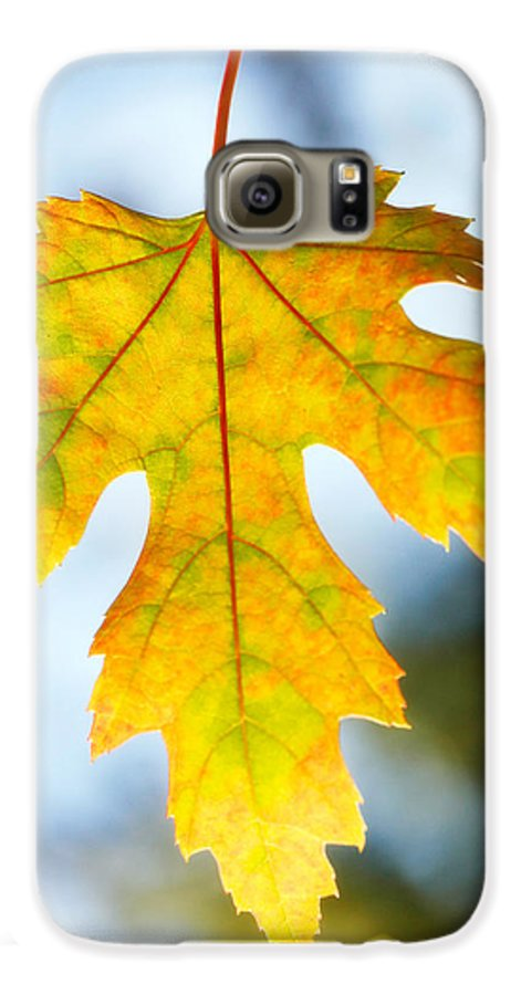 Maple Galaxy S6 Case featuring the photograph The Maple Leaf by Marilyn Hunt