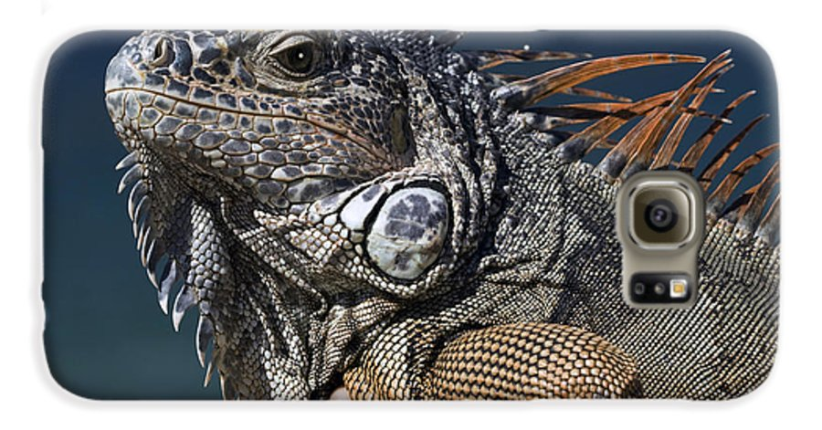 Animal Galaxy S6 Case featuring the photograph The Night Of The Iguana by Carl Purcell