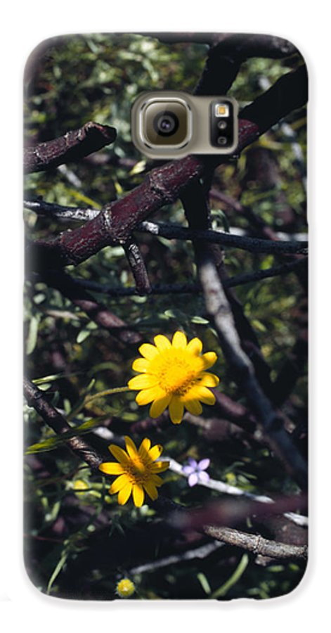 Flower Galaxy S6 Case featuring the photograph The Prisoner by Randy Oberg