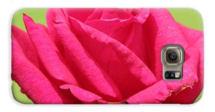 Roses Galaxy S6 Case featuring the photograph The Rose by Amanda Barcon