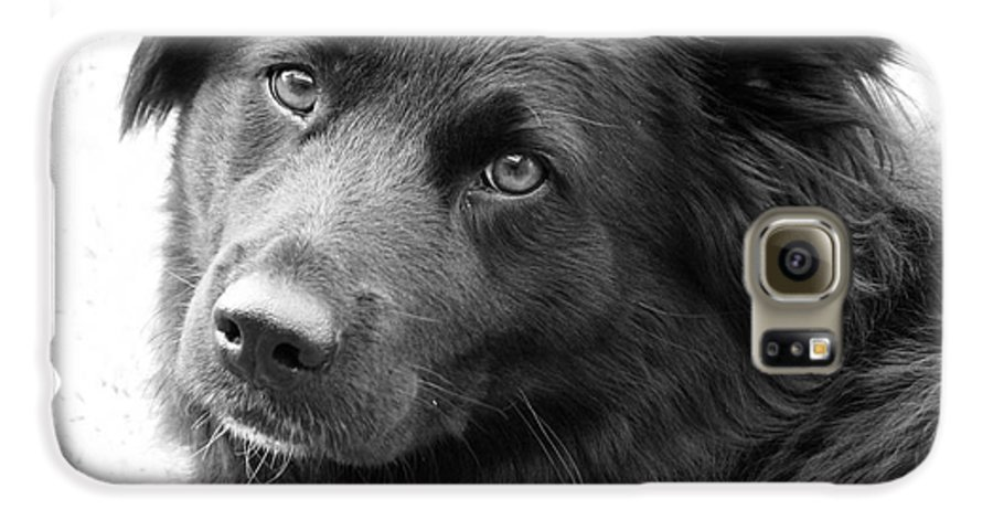 Dog Galaxy S6 Case featuring the photograph Thinking by Amanda Barcon