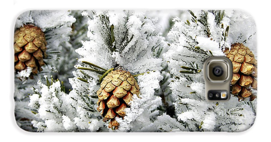 Frosty Galaxy S6 Case featuring the photograph Three Pinecones by Marilyn Hunt
