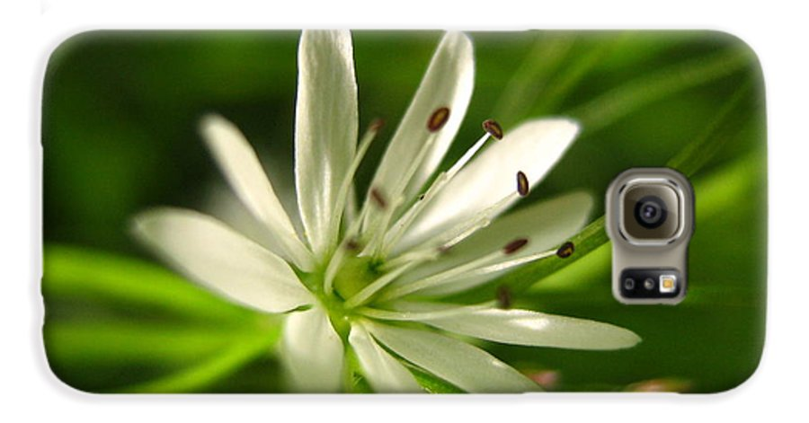 Tiny White Flower Galaxy S6 Case featuring the photograph Tiny White Flower by Melissa Parks