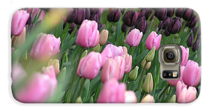 Tulips Galaxy S6 Case featuring the photograph Tulip Dreams by Louise Magno