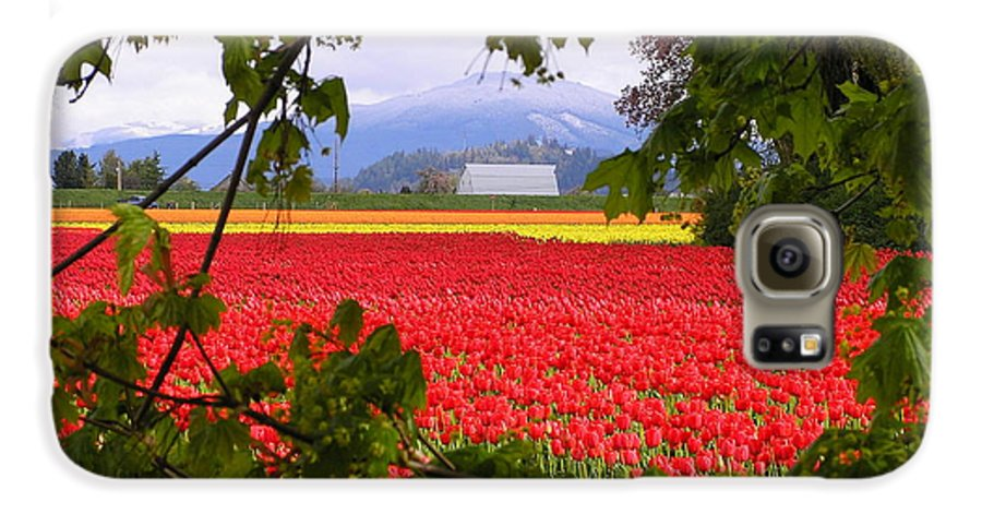 Tulip Galaxy S6 Case featuring the photograph Tulips Secret Window by Louise Magno