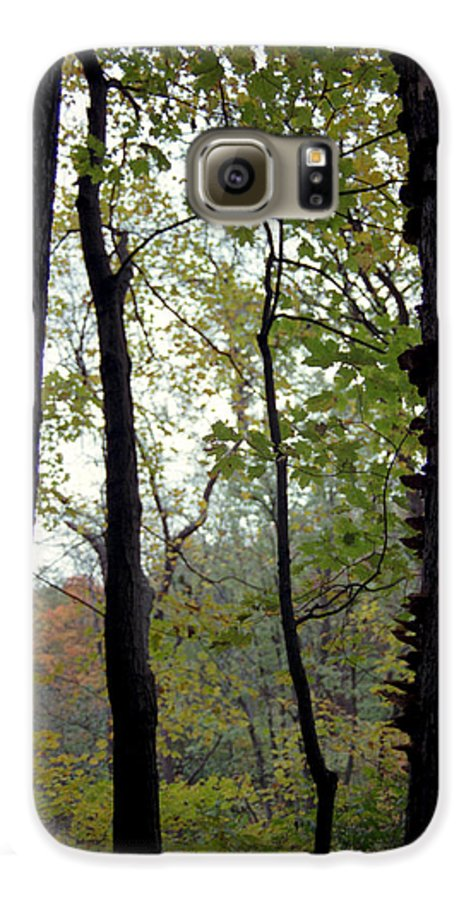 Tree Galaxy S6 Case featuring the photograph Vertical Limits by Randy Oberg