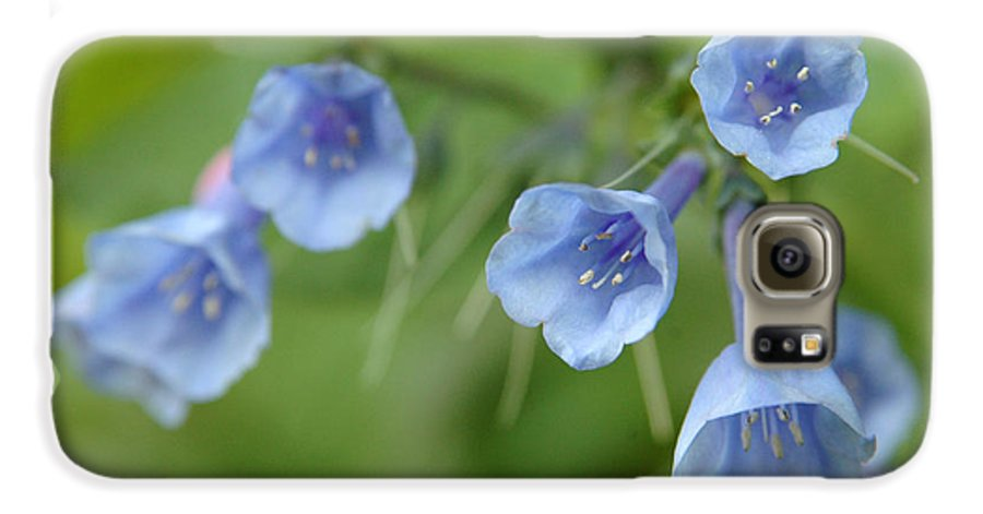 Bluebells Galaxy S6 Case featuring the photograph Virginia Bluebells I by Kathy Schumann
