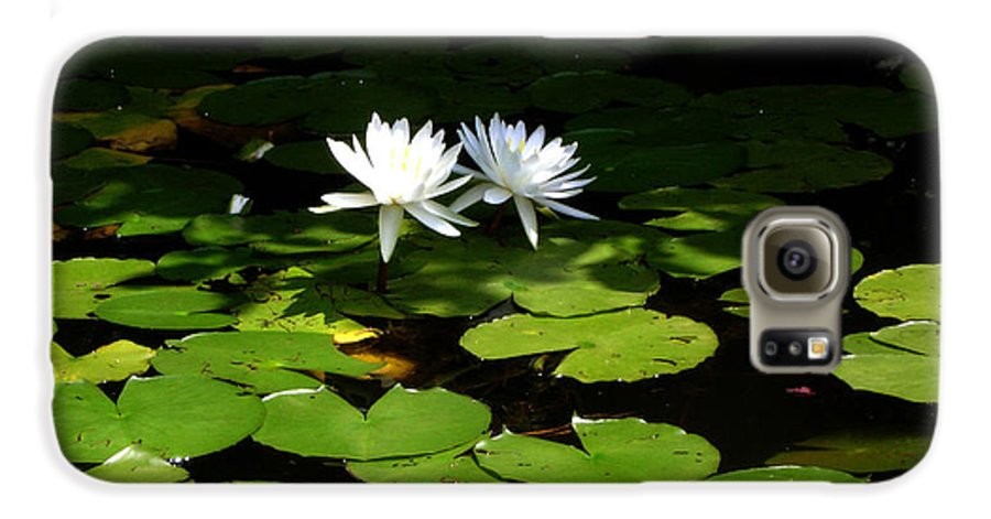 Water Galaxy S6 Case featuring the photograph Wading Fairies by Shelley Jones