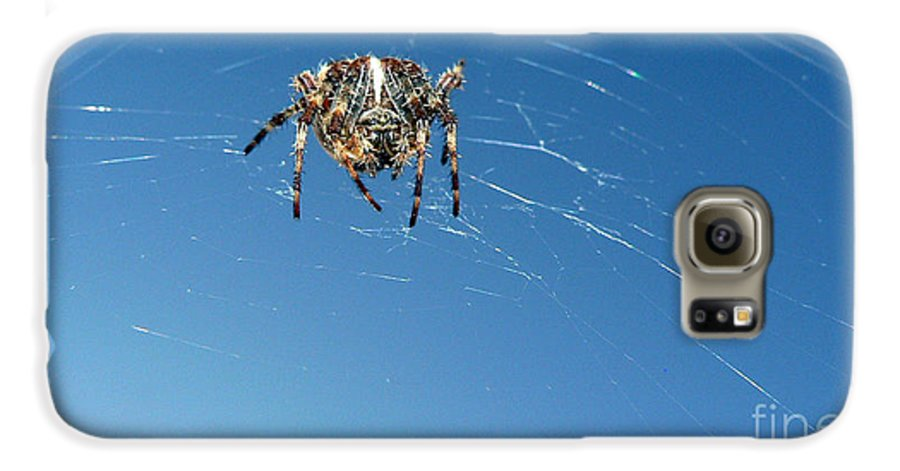 Spider Galaxy S6 Case featuring the photograph Waiting by Larry Keahey