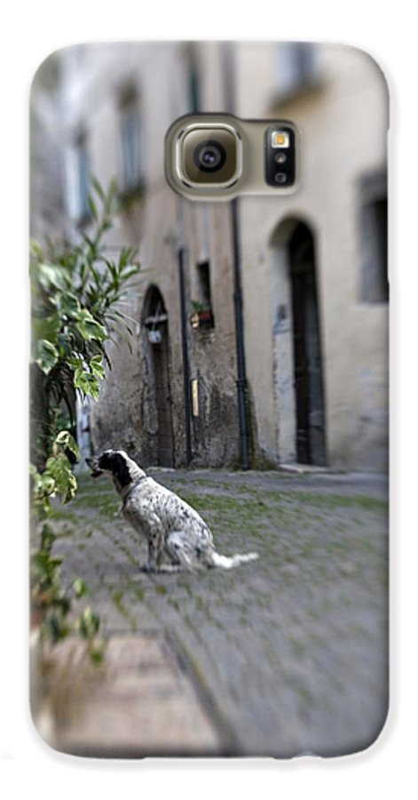Dog Galaxy S6 Case featuring the photograph Waiting by Marilyn Hunt