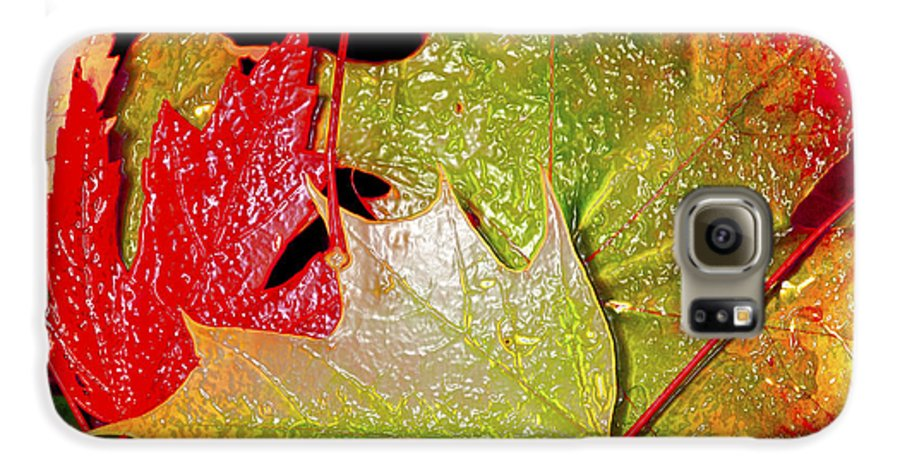 Leaves Galaxy S6 Case featuring the photograph Wet Leaves Of Fall by Larry Keahey