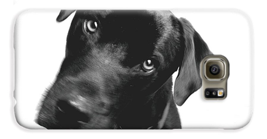 Labrador Galaxy S6 Case featuring the photograph What by Amanda Barcon