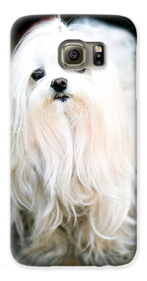 Small Galaxy S6 Case featuring the photograph White Fluff by Marilyn Hunt