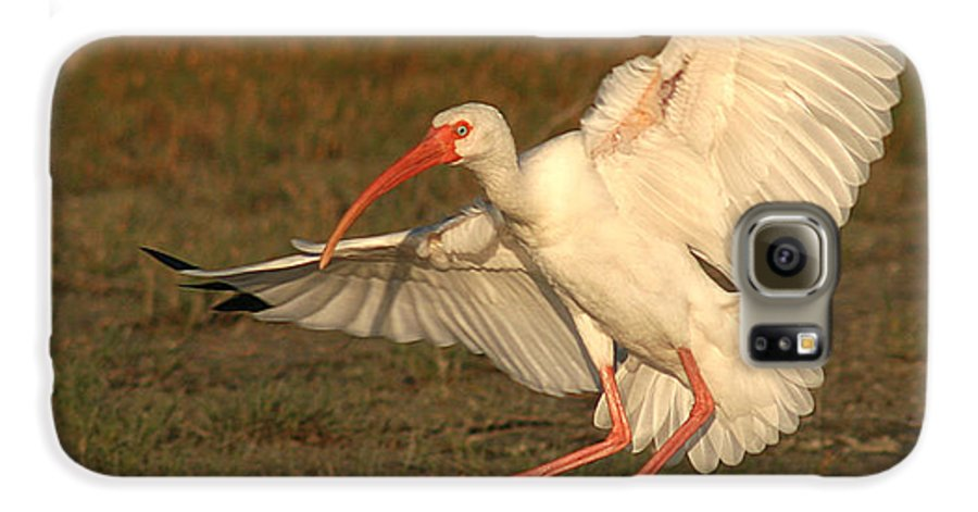 Ibis Galaxy S6 Case featuring the photograph White Ibis Landing Upon Ground by Max Allen