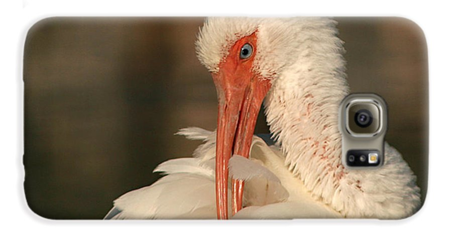 Ibis Galaxy S6 Case featuring the photograph White Ibis Placid Preening by Max Allen
