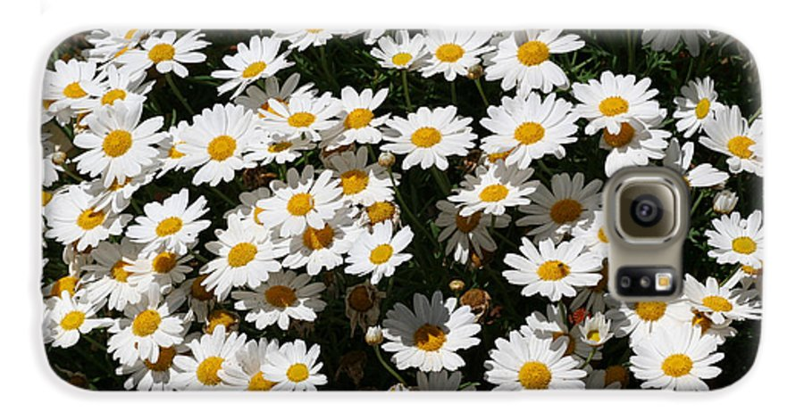 White Galaxy S6 Case featuring the photograph White Summer Daisies by Christine Till