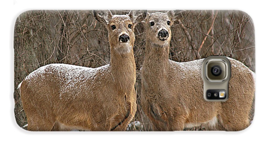 Deer Galaxy S6 Case featuring the photograph White-tailed Deer Pair Peering Out From Snowstorm by Max Allen