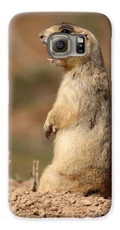 Prairie Dog Galaxy S6 Case featuring the photograph White-tailed Prairie Dog Giving A Fierce Bark by Max Allen