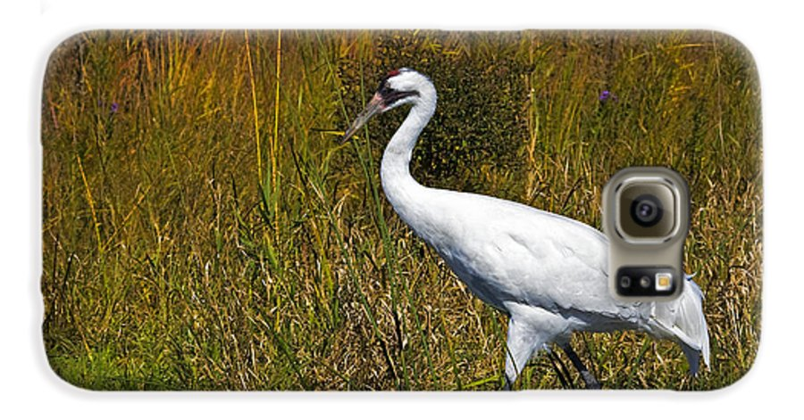 whooping Crane Galaxy S6 Case featuring the photograph Whooping Crane by Al Mueller