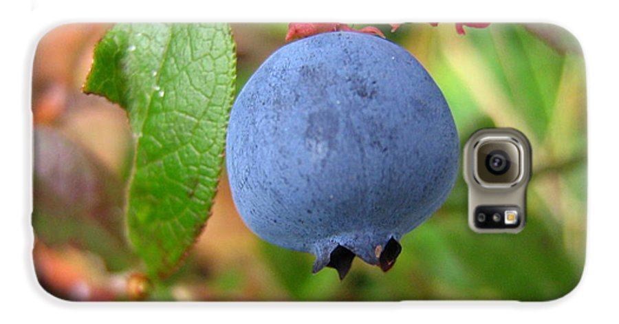Blueberry Galaxy S6 Case featuring the photograph Wild Blueberries by Melissa Parks