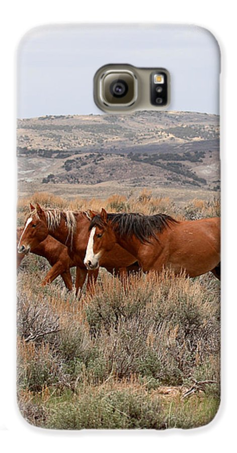 Horse Galaxy S6 Case featuring the photograph Wild Horse Trio by Max Allen