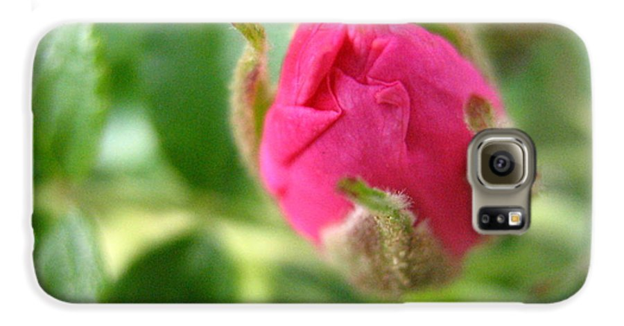 Rose Galaxy S6 Case featuring the photograph Wild Rose Bud by Melissa Parks