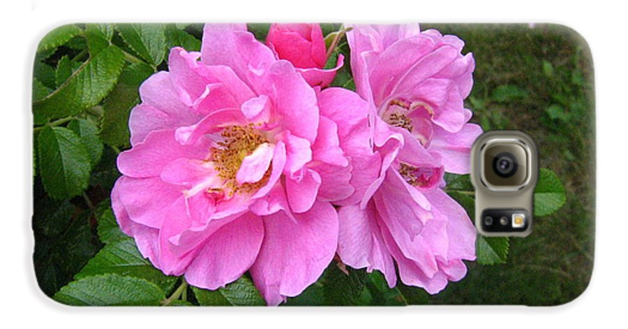 Rose Galaxy S6 Case featuring the photograph Wild Roses by Melissa Parks