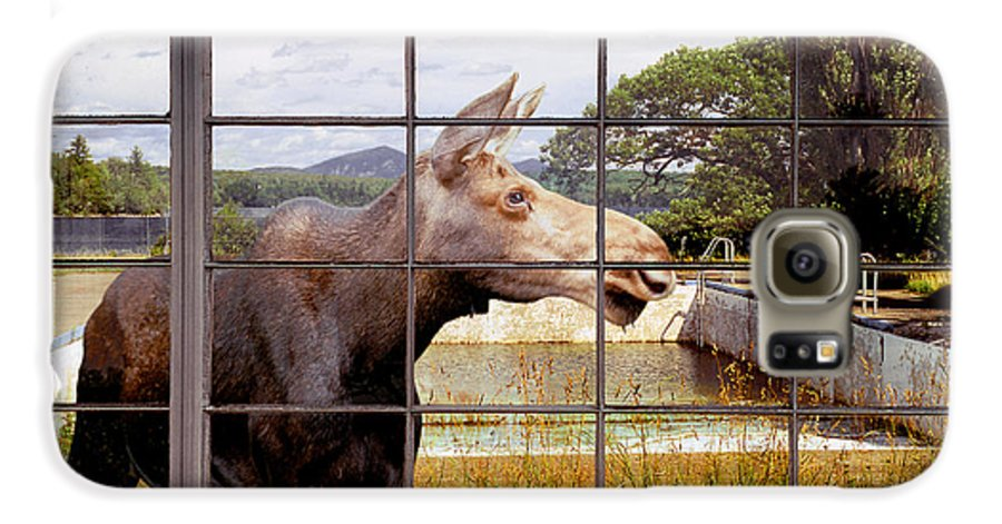 Moose Galaxy S6 Case featuring the photograph Window - Moosehead Lake by Peter J Sucy