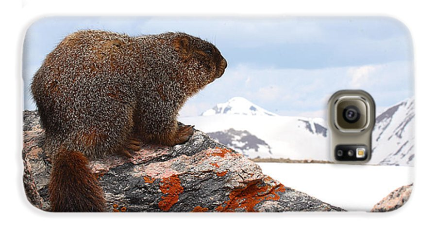 Marmot Galaxy S6 Case featuring the photograph Yellow-bellied Marmot Enjoying The Mountain View by Max Allen