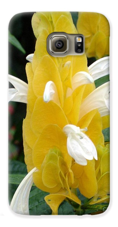 Flower Galaxy S6 Case featuring the photograph Yellow Eruption by Shelley Jones