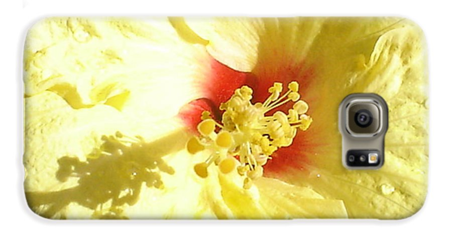 Yellow Hibiscus Galaxy S6 Case featuring the photograph Yellow Hibiscus Close Up by Chandelle Hazen