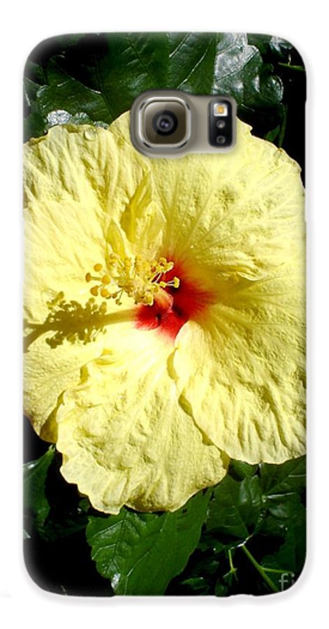 Flower Galaxy S6 Case featuring the photograph Yellow Hibiscus The Hawaiian State Flower by Chandelle Hazen