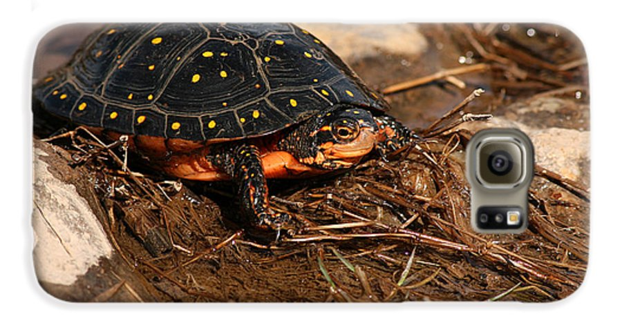 Turlte Galaxy S6 Case featuring the photograph Yellow-spotted Turtle Crawling Through Wetland by Max Allen