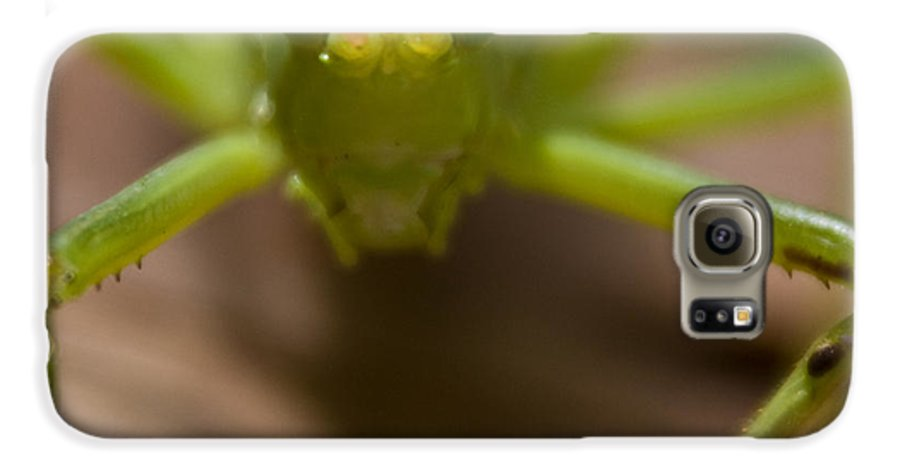 Katydid Galaxy S6 Case featuring the photograph You Said What by Douglas Barnett