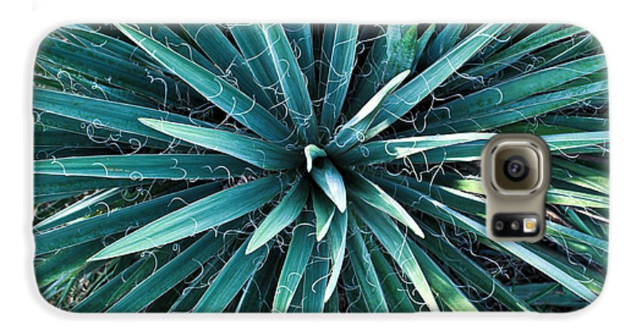 Yucca Galaxy S6 Case featuring the photograph Yucca Plant Detail by Douglas Barnett