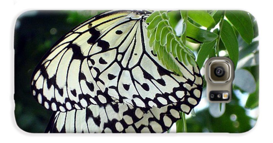 Butterfly Galaxy S6 Case featuring the photograph Zebra In Disguise by Shelley Jones
