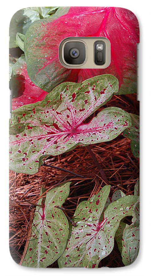 Caladium Galaxy S7 Case featuring the photograph Courtyard Caladium by Suzanne Gaff