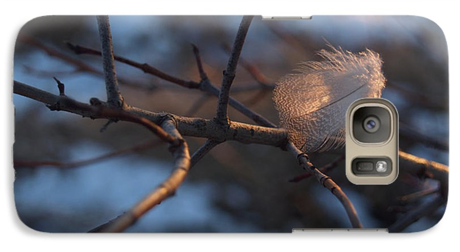 Branch Galaxy S7 Case featuring the photograph Downy Feather Backlit On Wintry Branch At Twilight by Anna Lisa Yoder