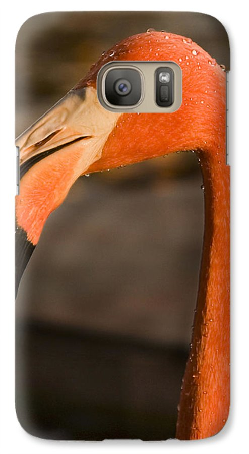 3scape Galaxy S7 Case featuring the photograph Flamingo by Adam Romanowicz