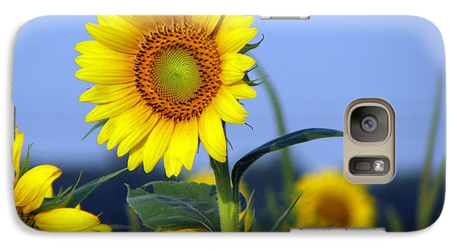 Sunflower Galaxy S7 Case featuring the photograph Getting To The Sun by Amanda Barcon