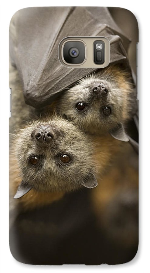 Bats Galaxy S7 Case featuring the photograph Hang In There by Mike Dawson