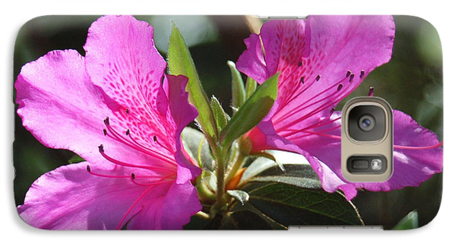 Azalea Galaxy S7 Case featuring the photograph In Full Bloom by Suzanne Gaff