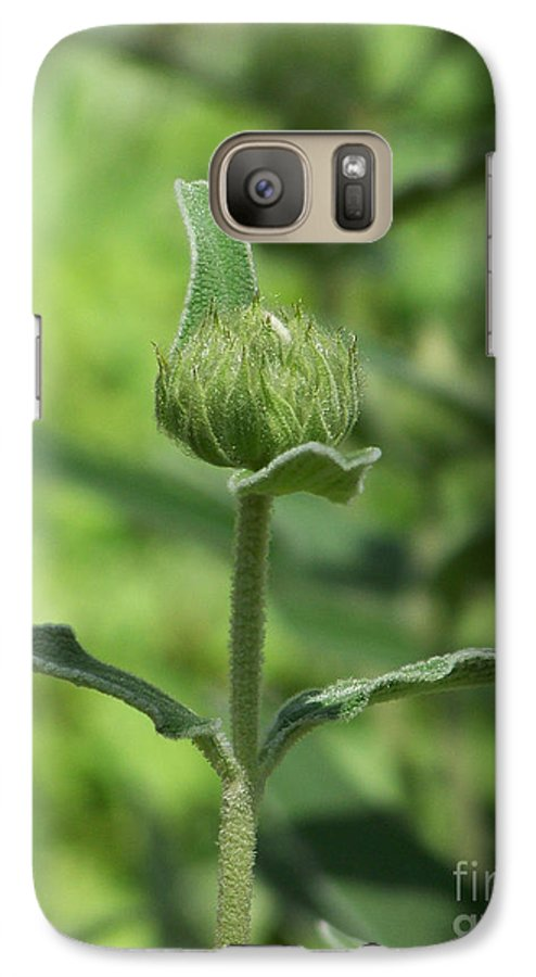 Plants Galaxy S7 Case featuring the photograph Its A Green World by Kathy McClure