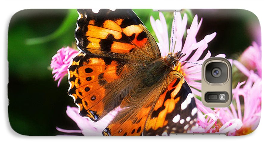 Flower Galaxy S7 Case featuring the photograph Late Summer Painted Lady by Marilyn Hunt