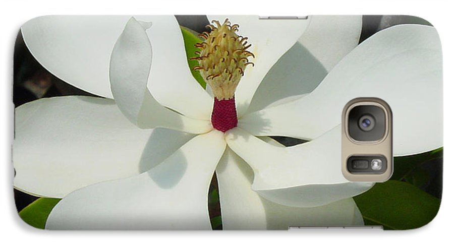 Magnolia Grandiflora Galaxy S7 Case featuring the photograph Magnolia II by Suzanne Gaff