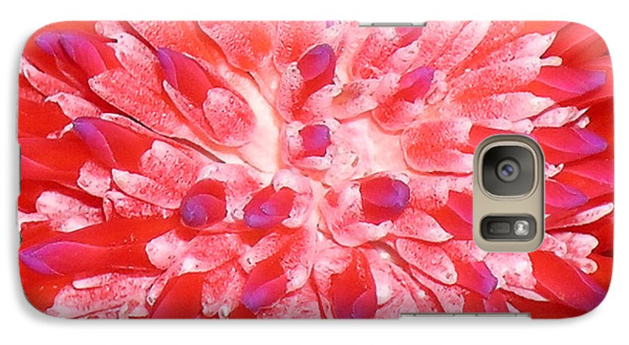 Hawaii Iphone Cases Galaxy S7 Case featuring the photograph Molokai Bromeliad by James Temple