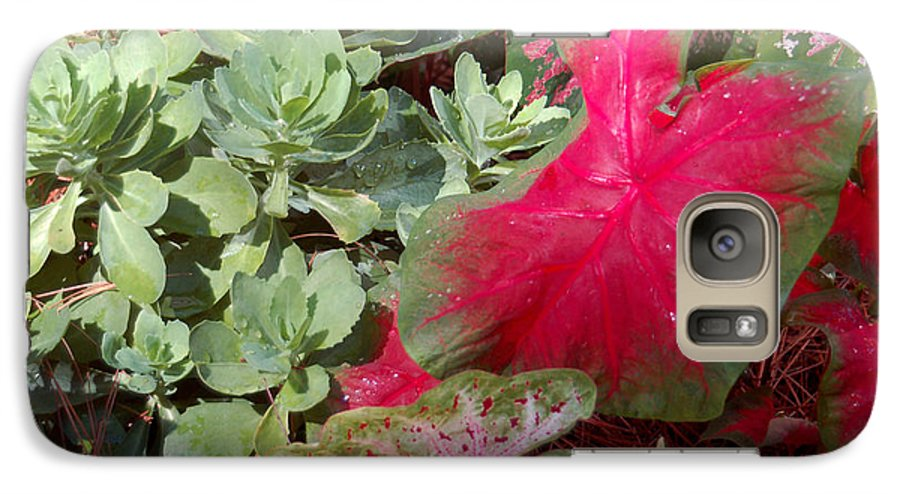 Caladium Galaxy S7 Case featuring the photograph Morning Rain by Suzanne Gaff