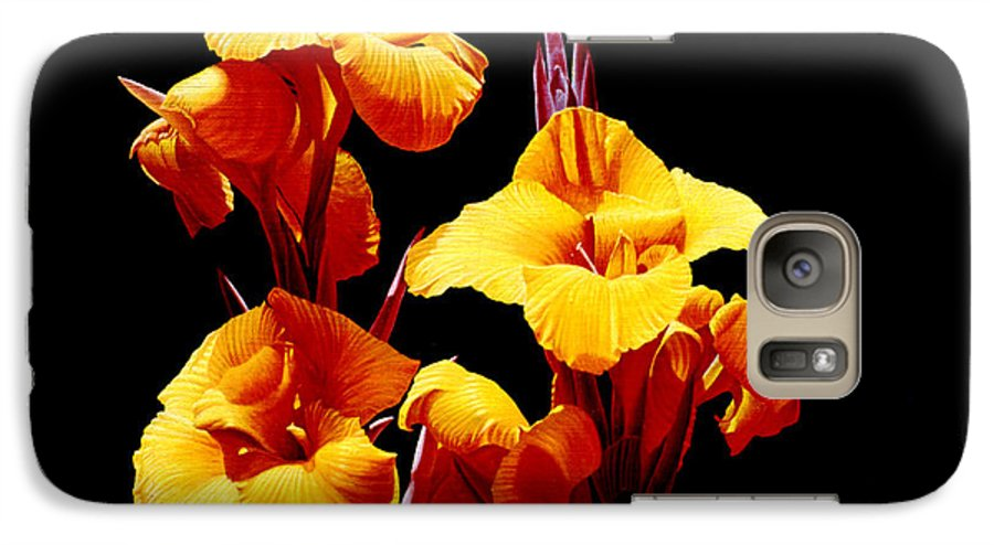 Yellow Cannas Galaxy S7 Case featuring the painting Orange Cannas by Gary Hernandez