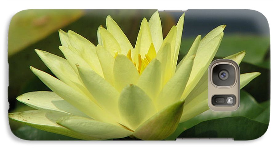 Lillies Galaxy S7 Case featuring the photograph Peace by Amanda Barcon