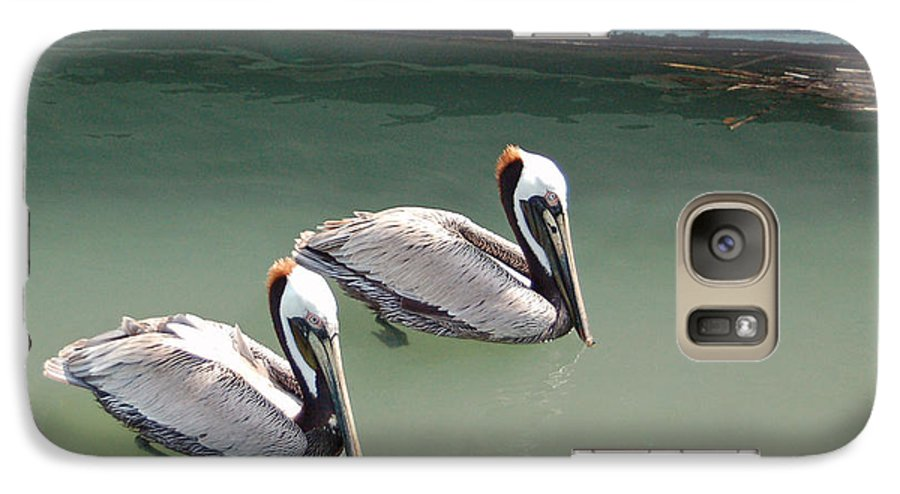 Brown Pelican Galaxy S7 Case featuring the photograph Pelicans Partners by Suzanne Gaff